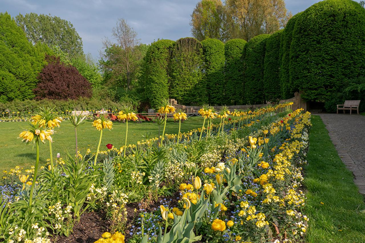 Фотография Германия Berlin Gardens Природа Тюльпаны Парки Рябчик Первоцвет Газон Деревья Дизайн тюльпан парк Примула газоне дерево дерева деревьев дизайна