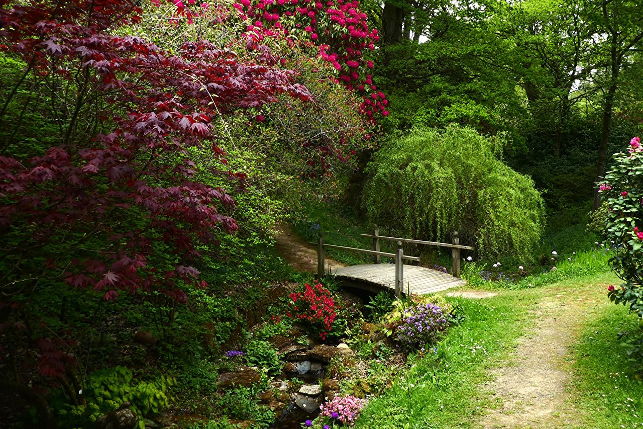 Картинка Англия Ramster Gardens Surrey Мосты ручеек Природа Сады ветвь кустов мост Ручей Ветки ветка на ветке Кусты