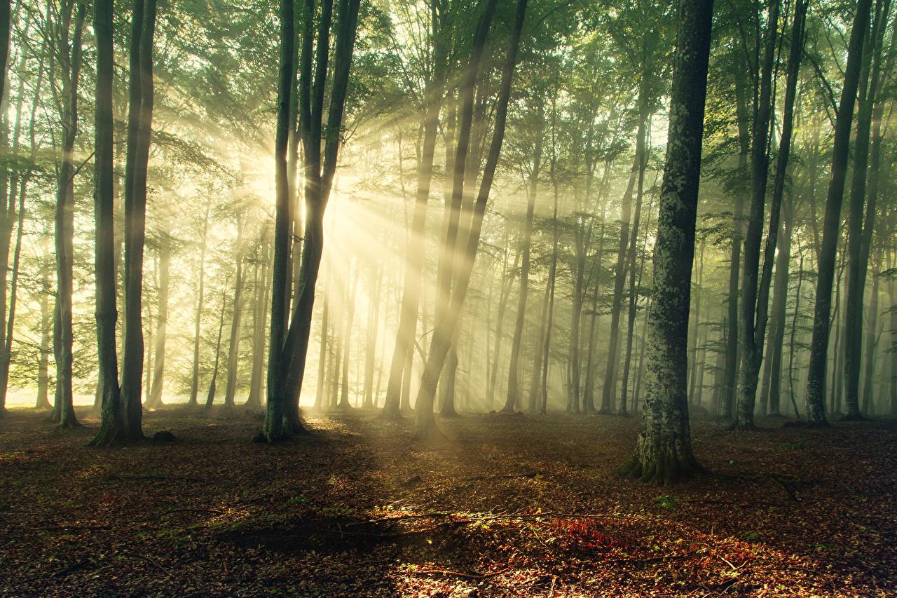 Фотографии Лучи света Природа лес дерево Леса дерева Деревья деревьев