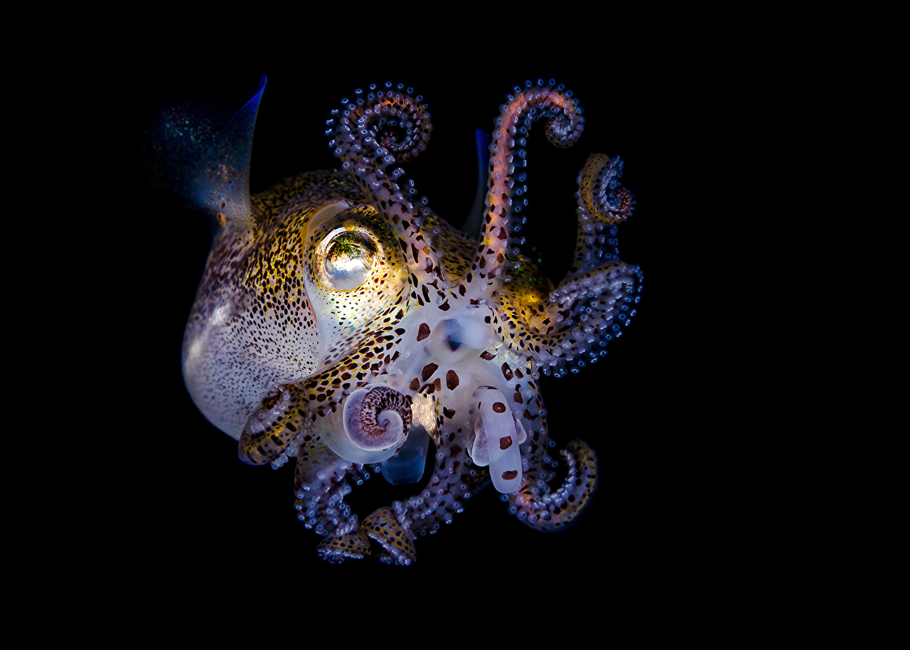 Фотографии Животные Подводный мир Осьминоги животное осминог