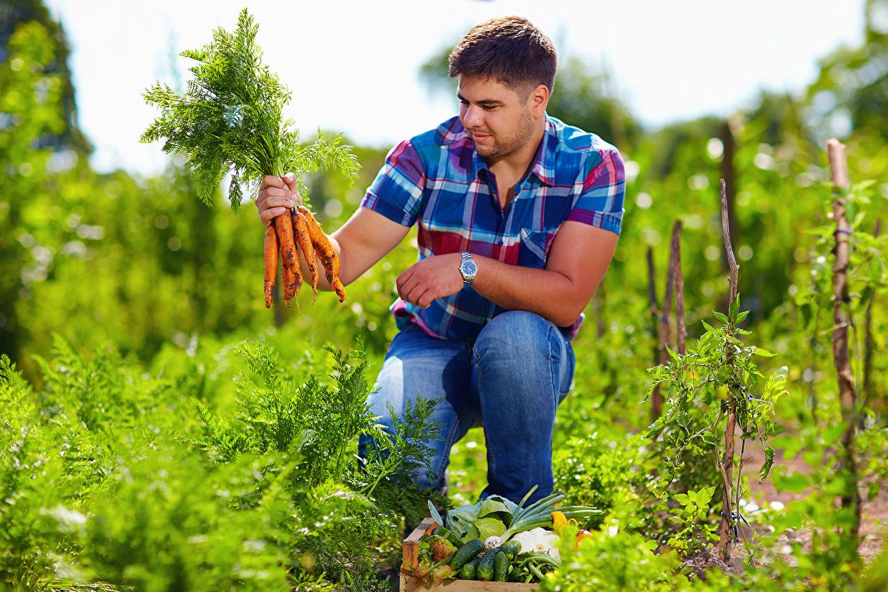 Фото мужчина морковка сидя Овощи Мужчины Морковь Сидит сидящие