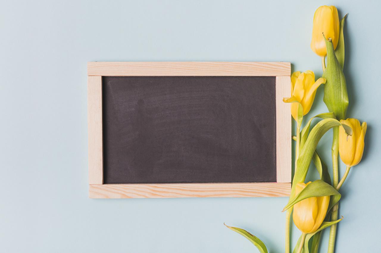 Фото Желтый Тюльпаны цветок Шаблон поздравительной открытки Цветной фон желтых желтые желтая тюльпан Цветы