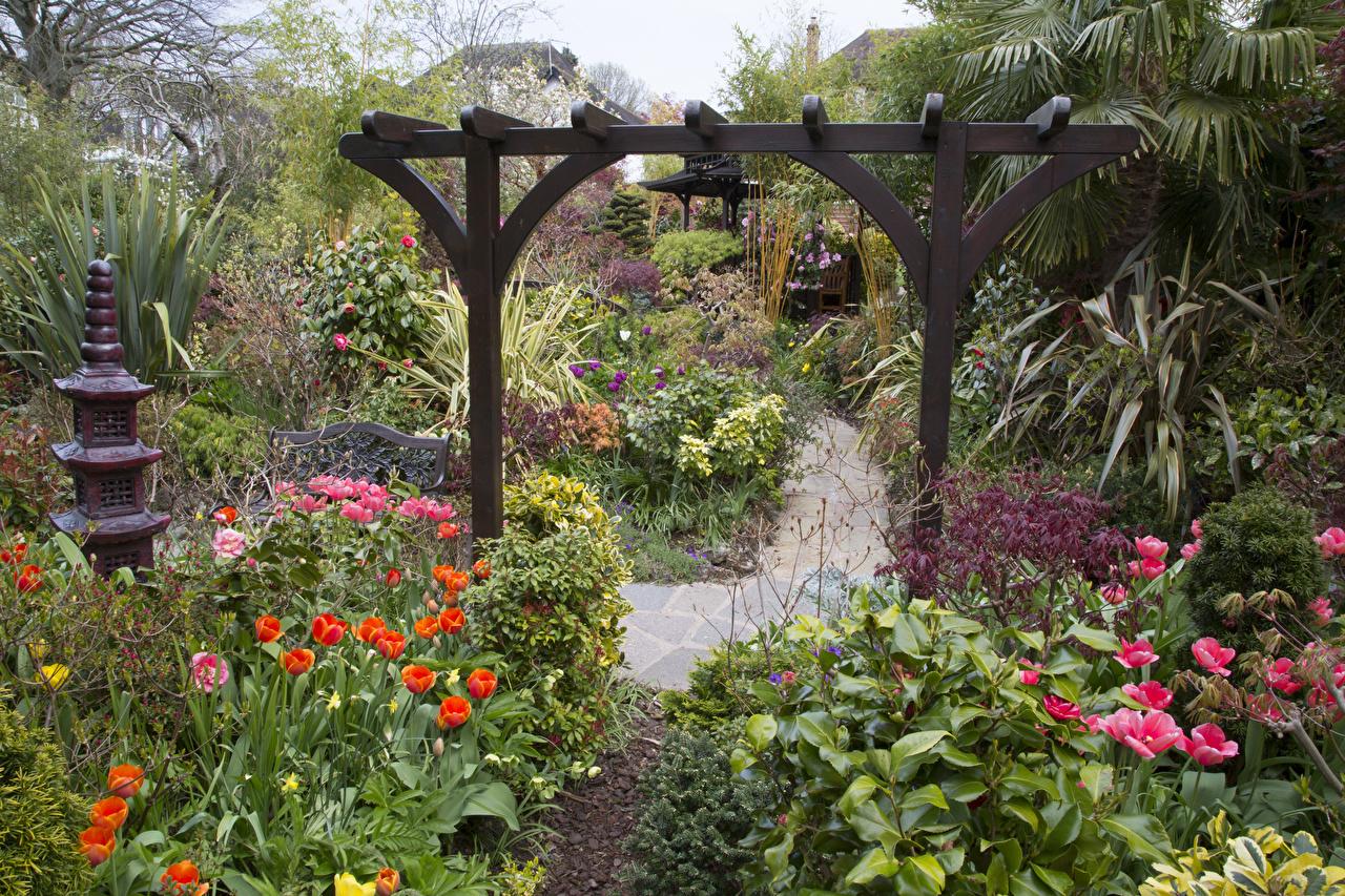 Обои Англия Walsall Garden Природа Тюльпаны Сады Кусты