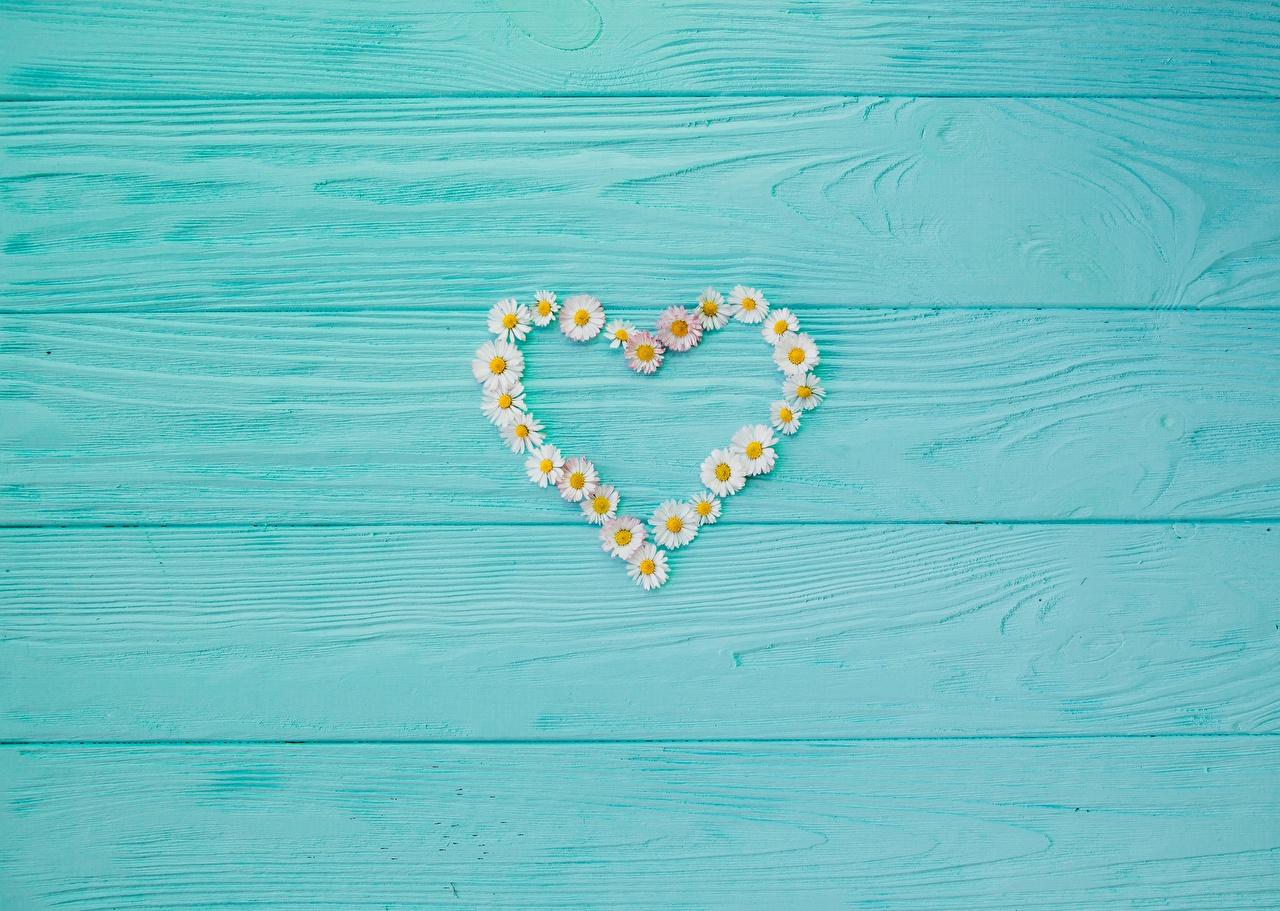 Картинки День святого Валентина Сердце ромашка Шаблон поздравительной открытки Доски День всех влюблённых серце сердца сердечко Ромашки
