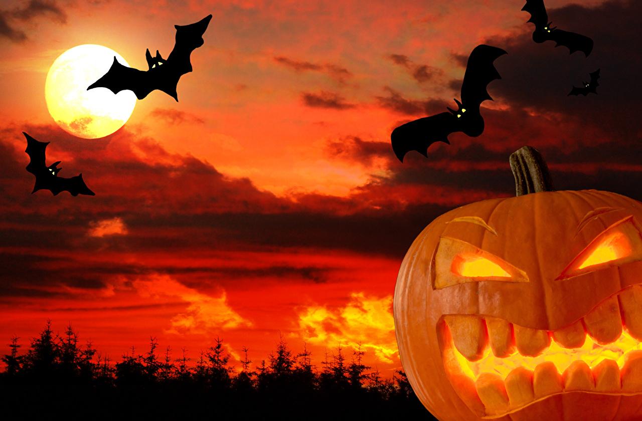 Обои Птицы Тыква Природа Хеллоуин Луна Небо Свечи Праздники луны луной