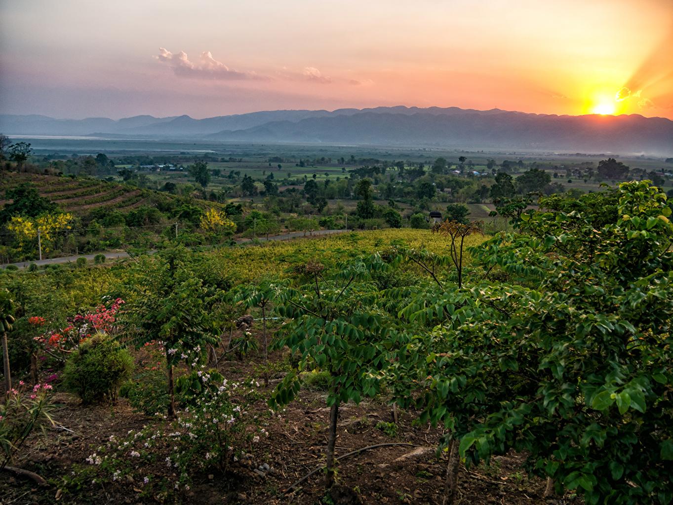 Картинки Red Mountain Estate Winery Myanmar Природа Поля Тропики Рассветы и закаты