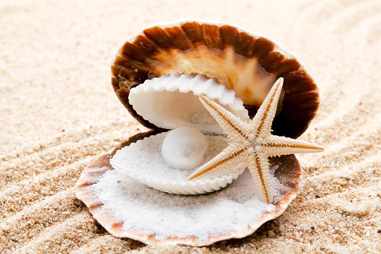 Крупным планом Жемчуг Морские звезды Ракушки Песок Соль Природа