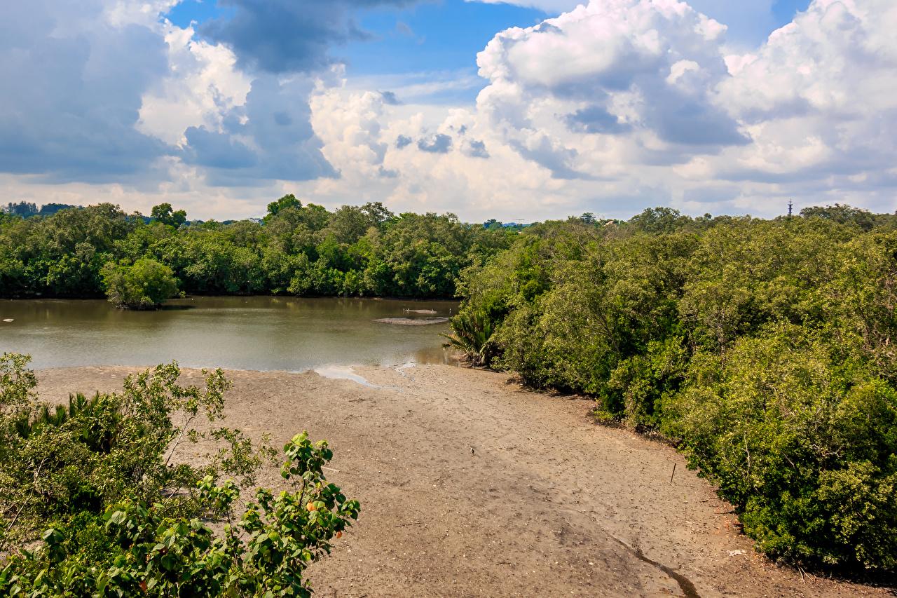 Фотография Сингапур Sungei Buloh Природа Леса парк песка Озеро лес песке Песок Парки