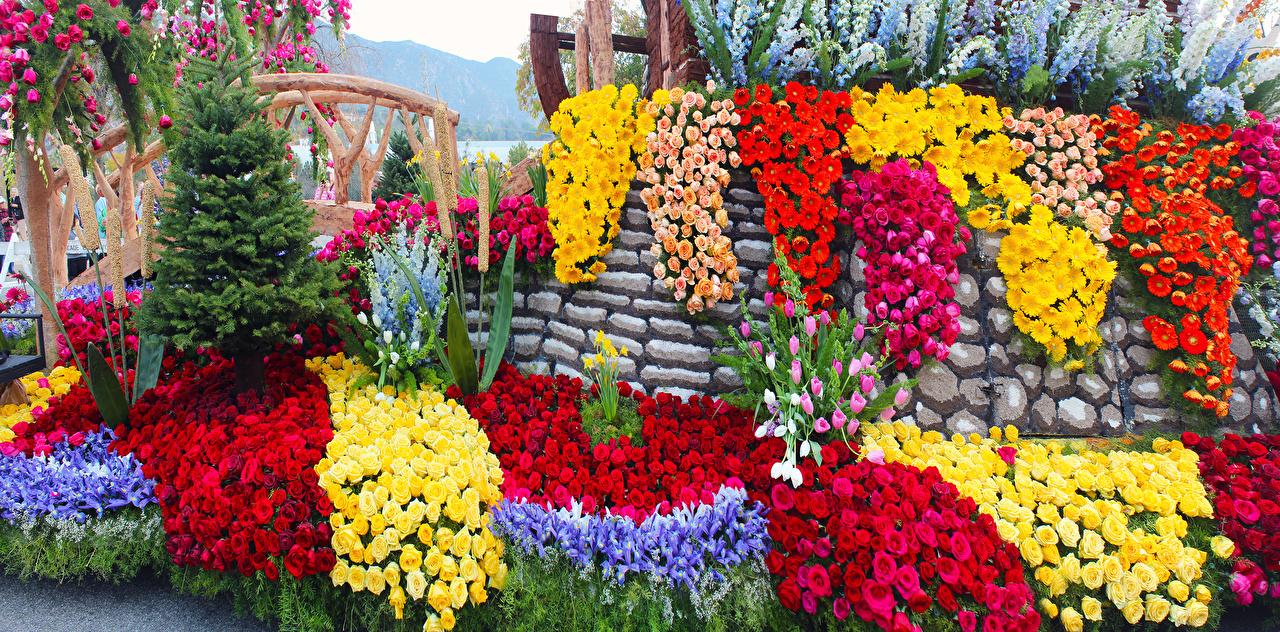 Обои для рабочего стола калифорнии америка Pasadena Розы Герберы Тюльпаны ирис Цветы Парки Дизайн Калифорния США штаты роза гербера тюльпан парк Ирисы цветок дизайна