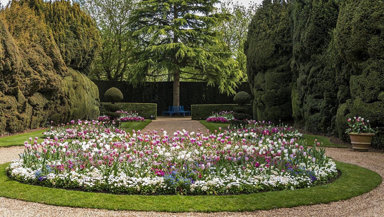Картинка Великобритания Ascott House Garden Природа Тюльпаны Сады Газон Кусты дерева Дизайн тюльпан газоне кустов дерево Деревья деревьев дизайна