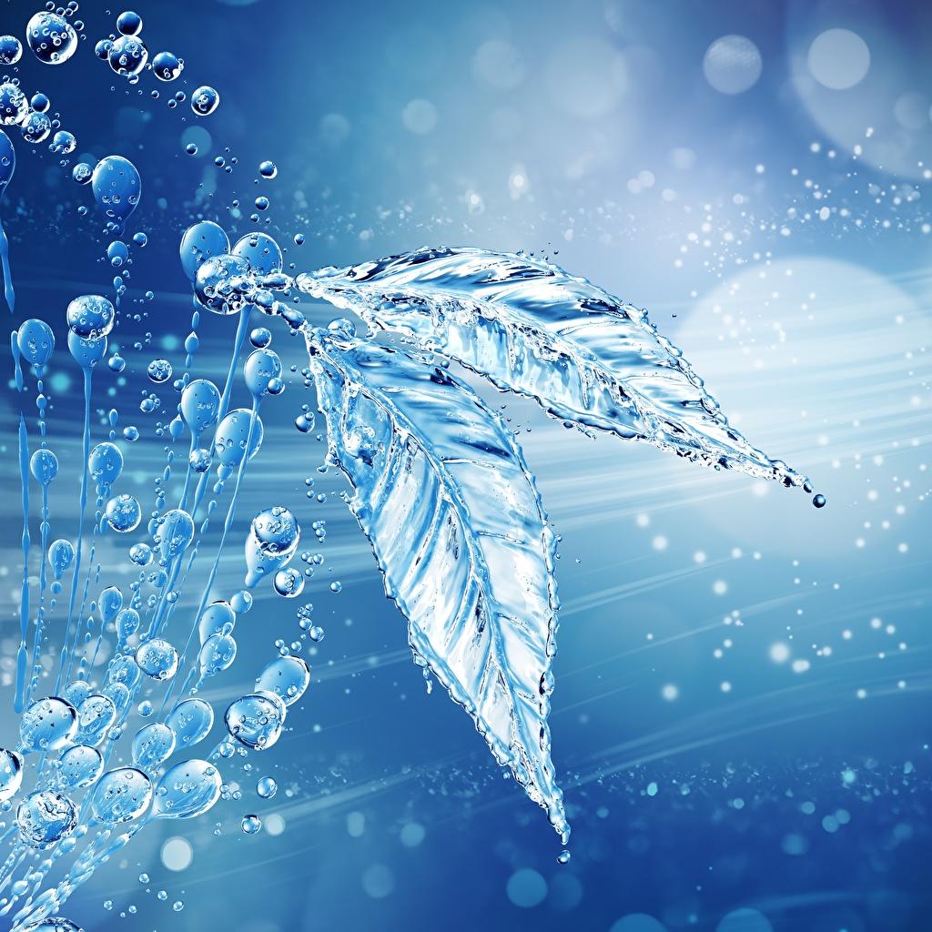 Картинки Листья капельки воде лист Листва капля Капли капель Вода
