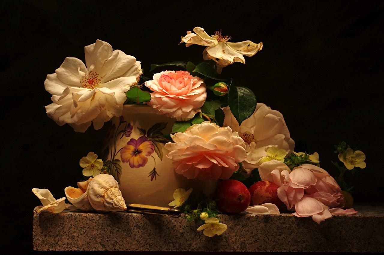 Фотографии роза Сливы цветок Ракушки вазе Натюрморт Розы Цветы вазы Ваза
