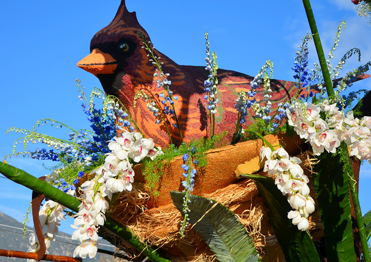 Картинка Калифорния птица США Rose Parade Pasadena Орхидеи Цветы Маттиола Дизайн калифорнии Птицы штаты америка орхидея цветок Левкой дизайна
