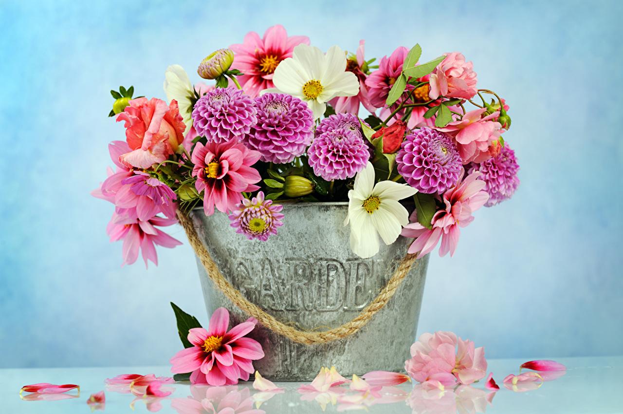 Обои для рабочего стола Розы Ведро Лепестки Цветы Ромашки Георгины Цветной фон роза ведре ведра лепестков цветок ромашка