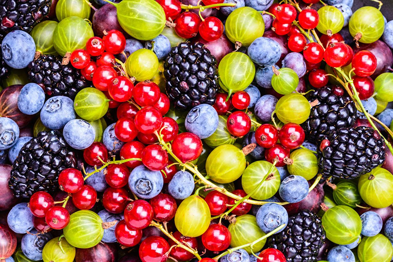 Картинки Черника Ежевика Крыжовник Смородина Еда Ягоды Пища Продукты питания