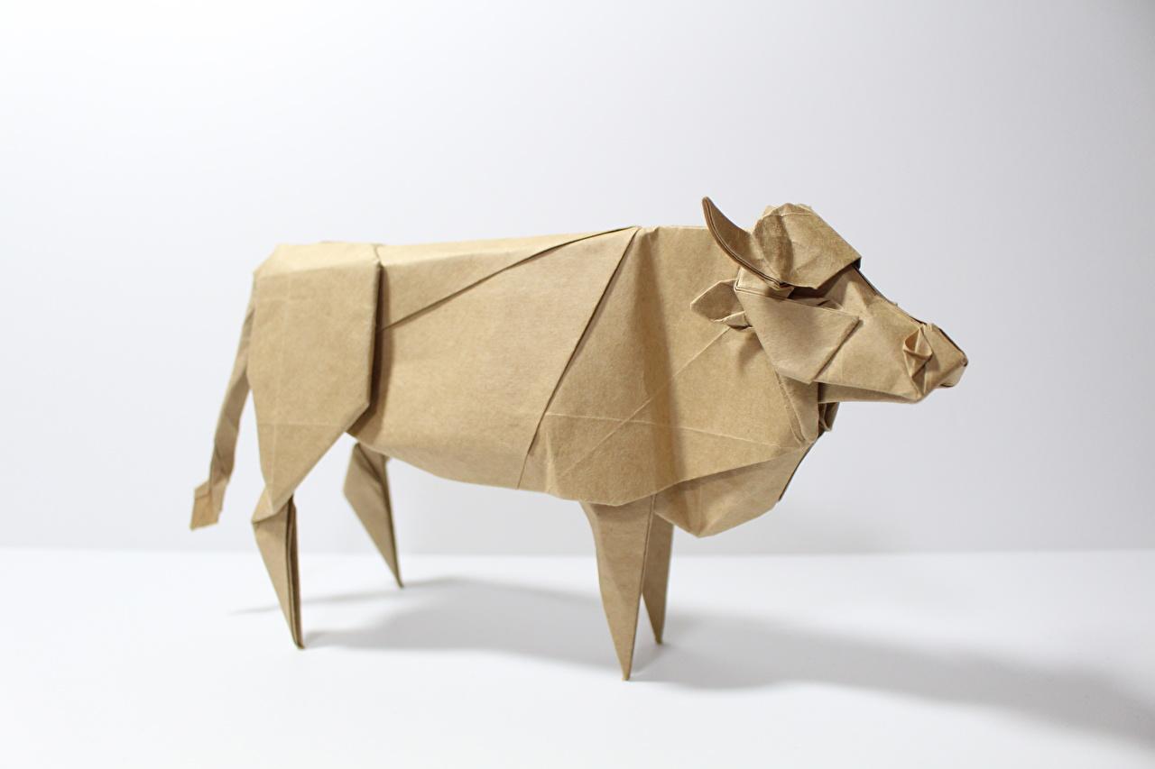 Фотографии коровы Оригами Бумага Животные Белый фон Корова бумаге бумаги животное белом фоне белым фоном