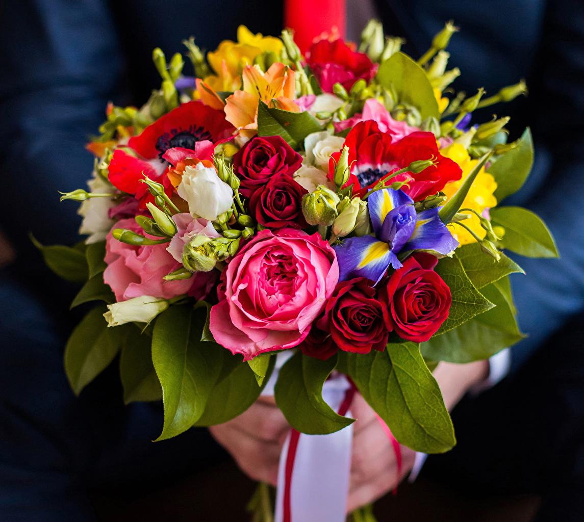 Фотография Букеты Розы Маки Ирисы Цветы Эустома цветок Лизантус
