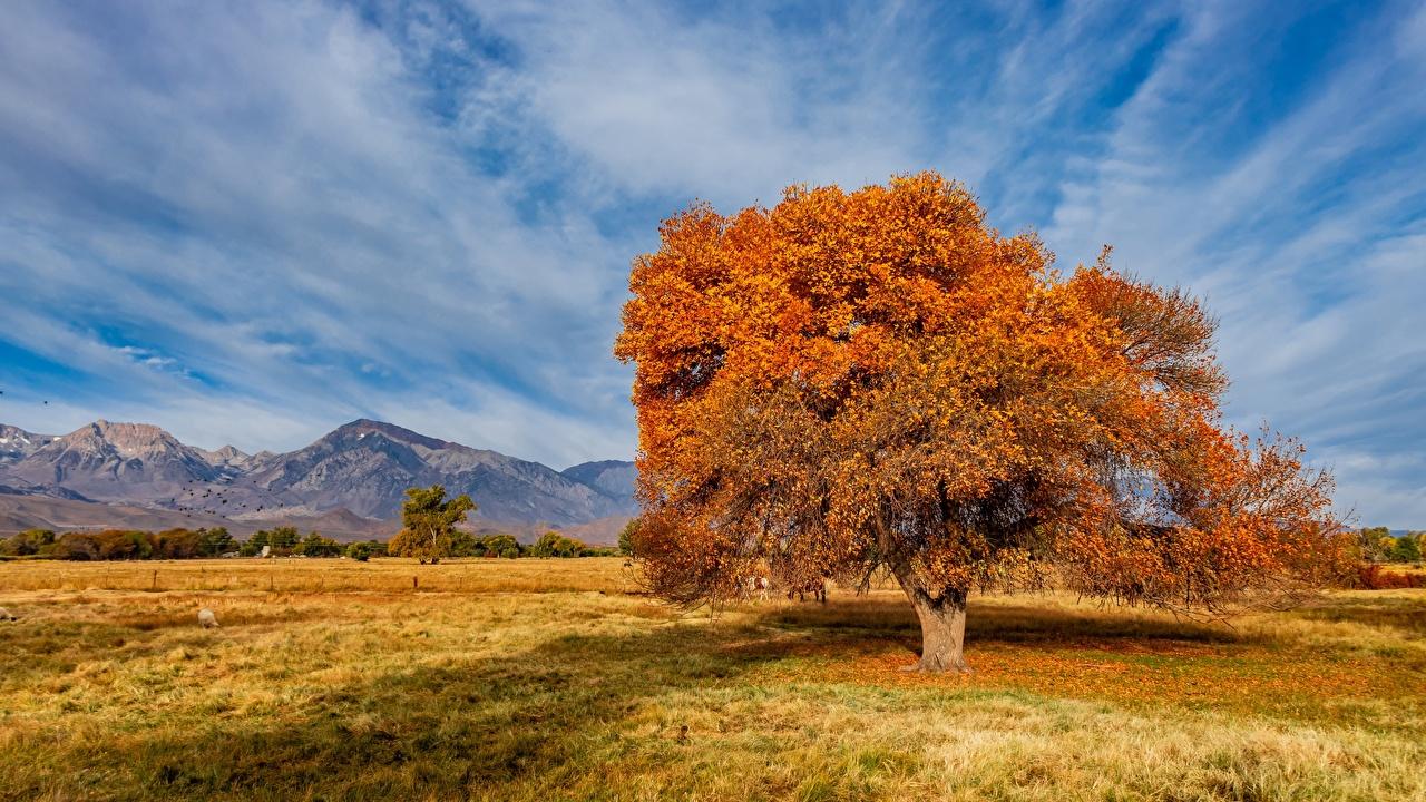 Фотография США Sierra Trailer Park Горы осенние Природа Небо дерево штаты америка гора Осень дерева Деревья деревьев