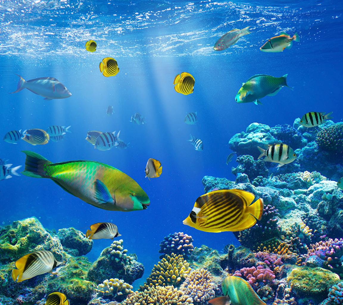 Картинки Рыбы Подводный мир Кораллы животное Животные