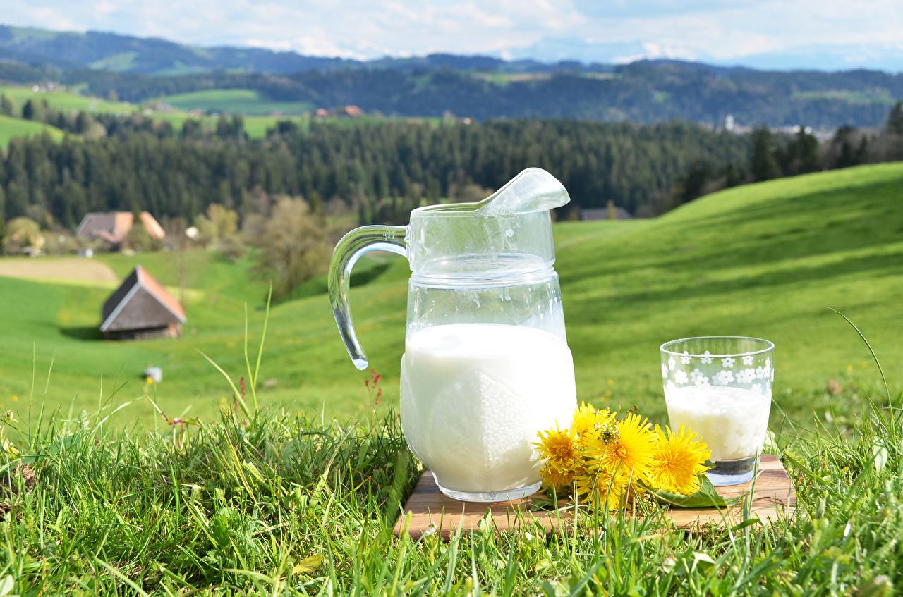 Обои Молоко Луга стакане кувшины Одуванчики Пища траве Кувшин Стакан стакана Еда Трава Продукты питания