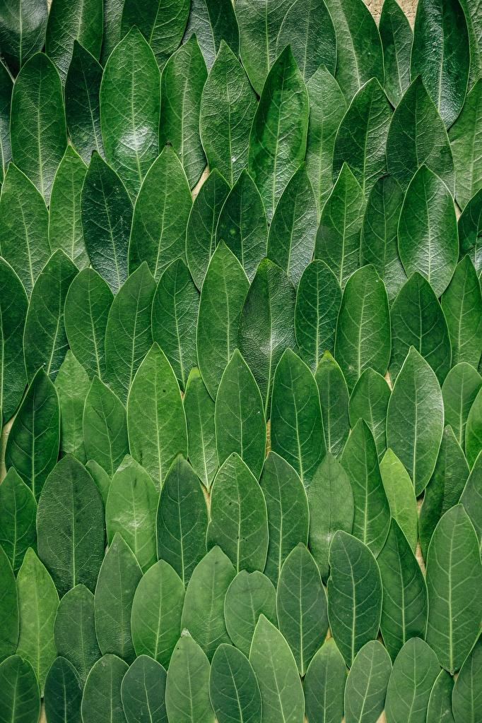 Фотография Листва Текстура Leaves Природа Зеленый  для мобильного телефона лист Листья зеленых зеленые зеленая