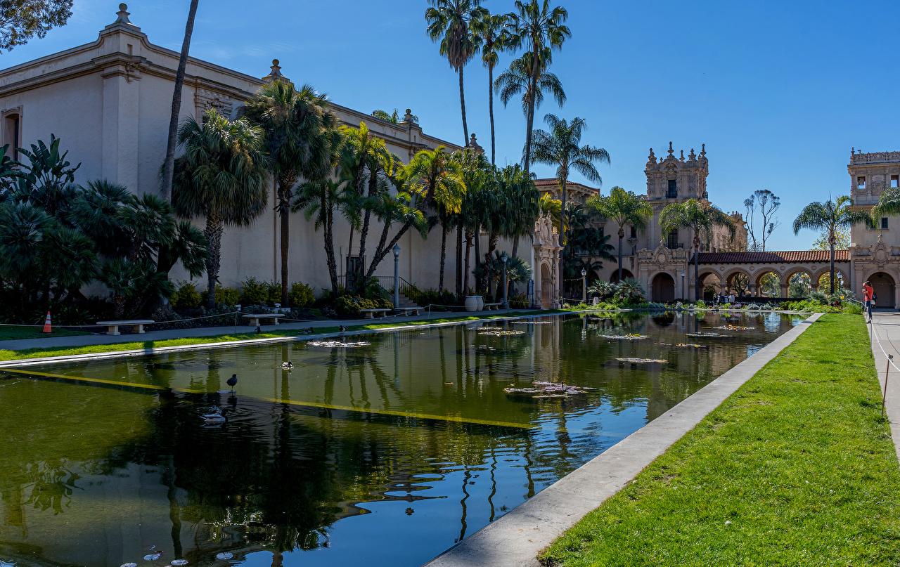 Обои Сан-Диего США Balboa Park Природа Пруд Парки Пальмы Здания штаты пальм пальма Дома