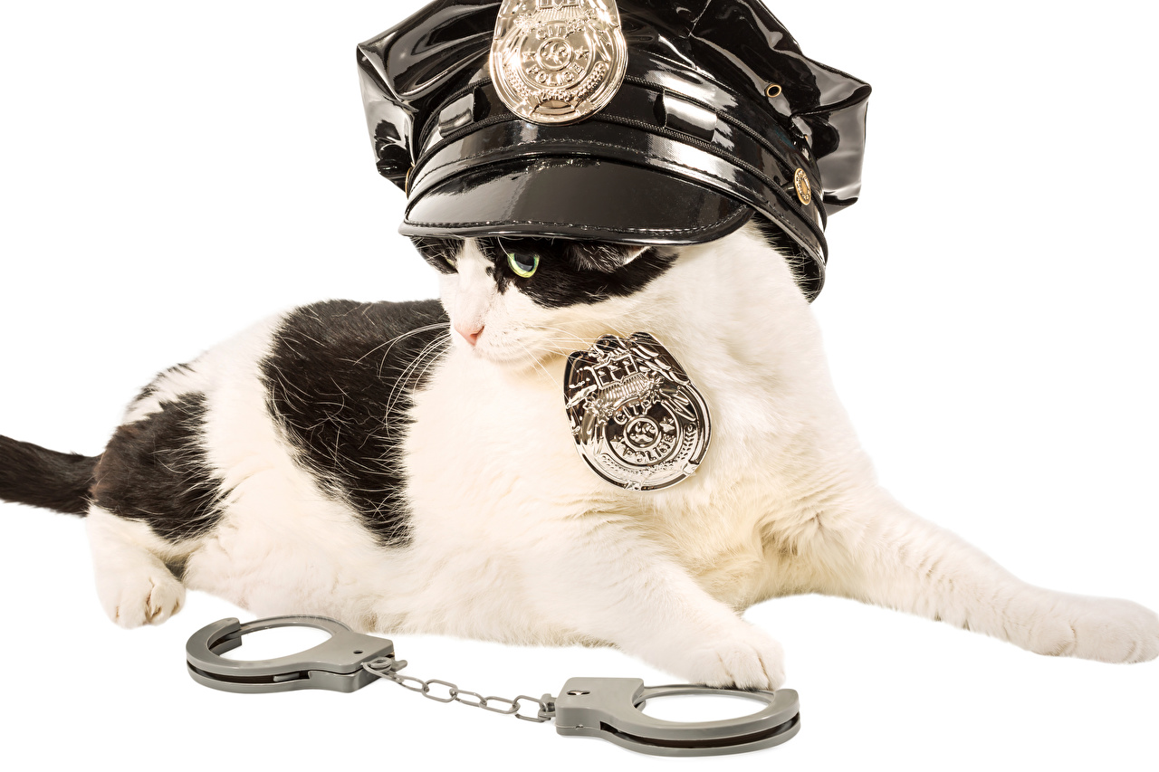 Фото кошка Полицейские Наручники Униформа животное Белый фон кот коты Кошки полицейский полицейская полицейский униформе Животные белом фоне белым фоном