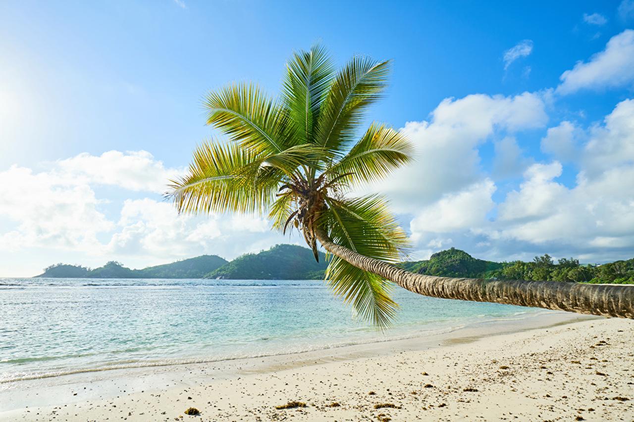 Фотография Природа Песок Пальмы Тропики берег Побережье