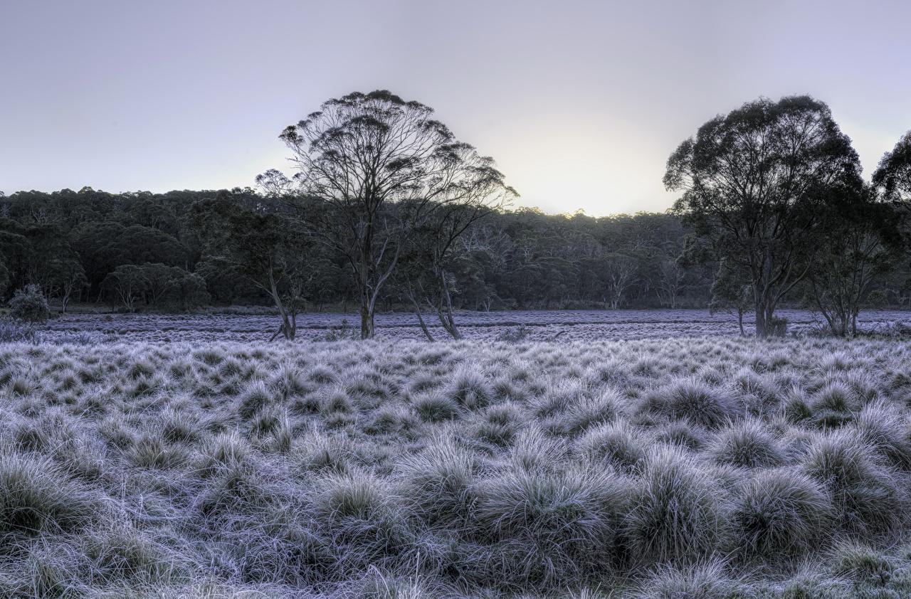 Фотография Австралия Barrington Tops National Park HDRI зимние Природа парк траве Деревья HDR Зима Парки Трава дерево дерева деревьев