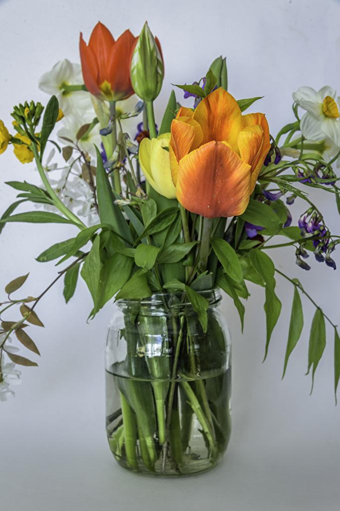 Обои для рабочего стола букет тюльпан Цветы банке Нарциссы Серый фон  для мобильного телефона Букеты Тюльпаны Банка банки цветок сером фоне