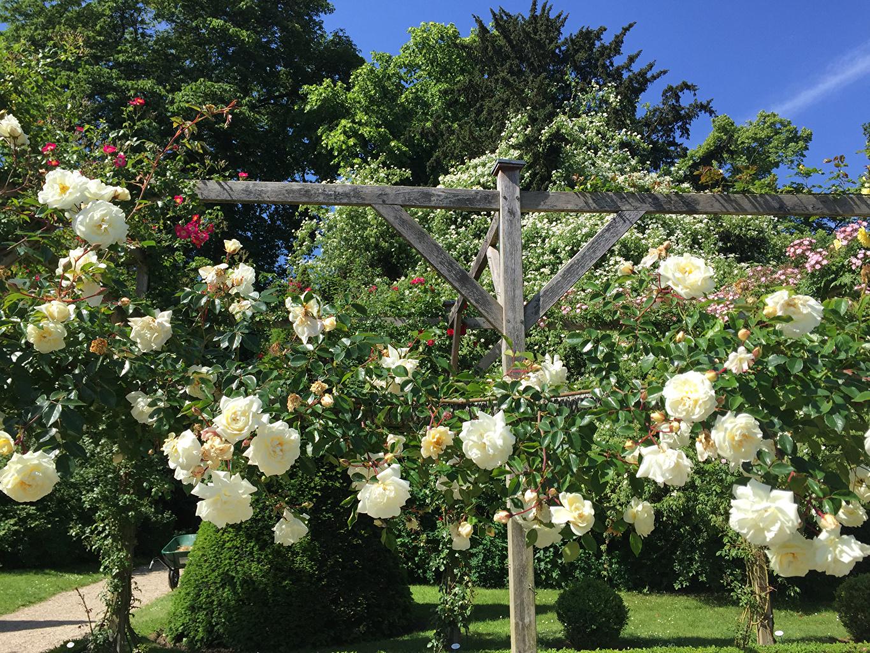 Обои для рабочего стола Париж Франция Bagatelle Rose Garden Розы Природа Сады Кусты париже роза кустов