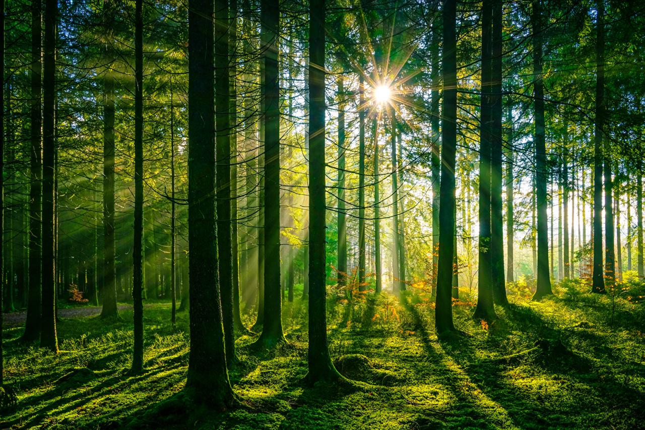 Картинки Лучи света Германия Schwarzwald Природа лес Деревья Леса дерево дерева деревьев