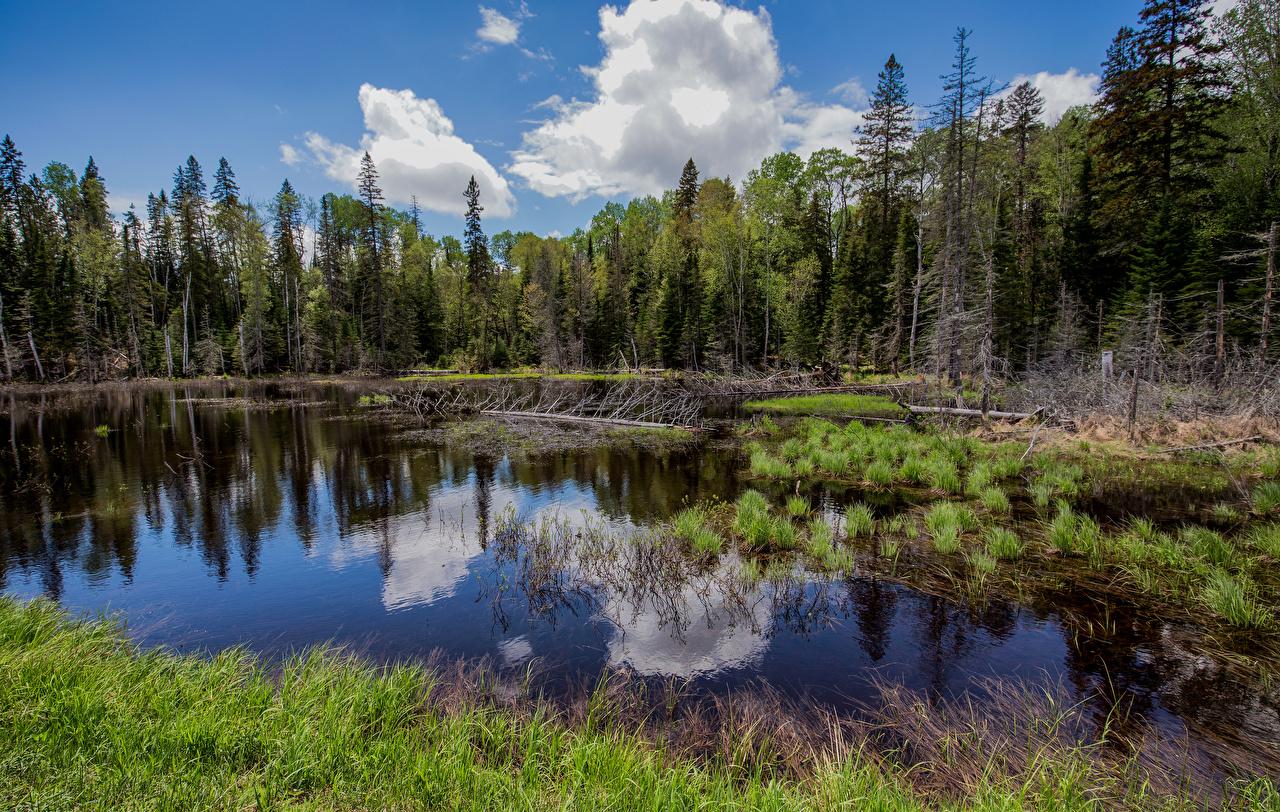 Обои для рабочего стола Канада Forillon National Park Природа лес Парки деревьев парк Леса дерево дерева Деревья