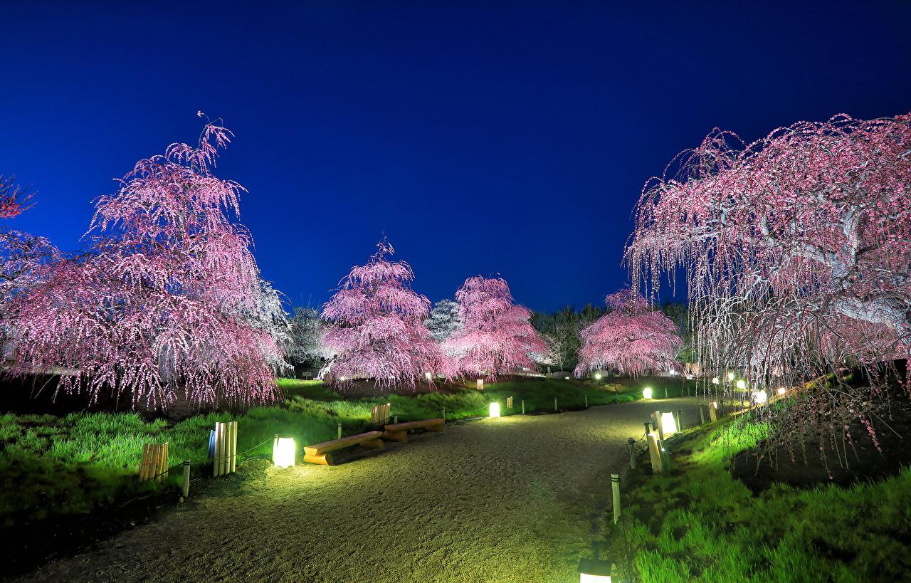 Фотография Токио Япония Природа Парки Уличные фонари Цветущие деревья