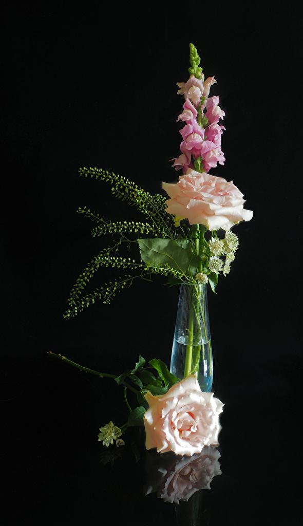 Фото роза Цветы Антирринум Ваза на черном фоне  для мобильного телефона Розы цветок Львиный зев вазе вазы Черный фон