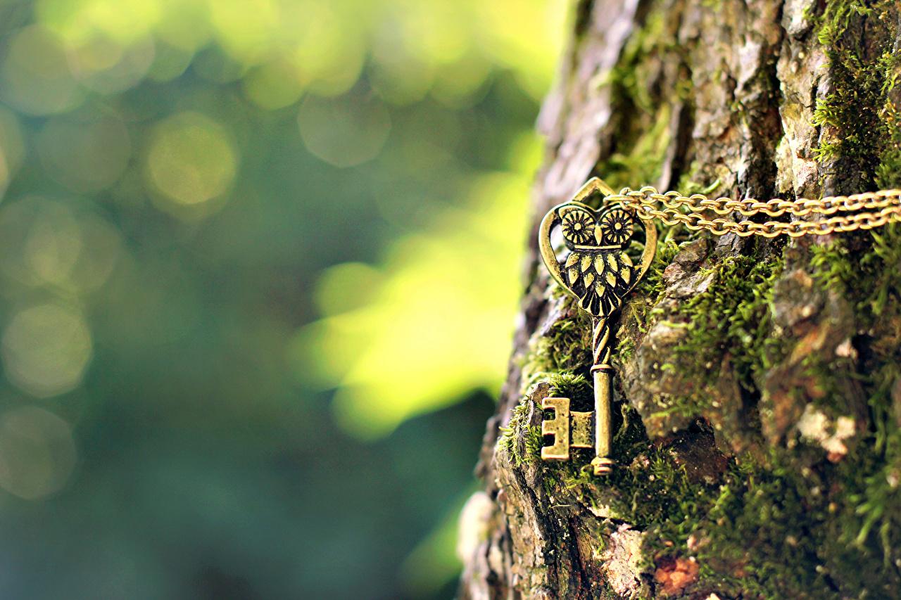 Картинка цепи мхом ключом Кора Ствол дерева вблизи Цепь мха Мох ключа Замковый ключ Крупным планом