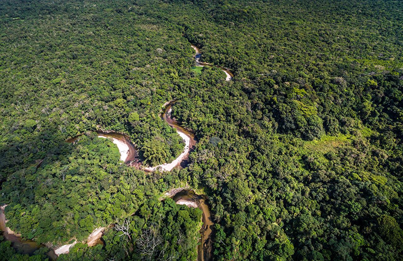 Обои Бразилия Amazon Jungle Природа Леса речка Сверху Реки
