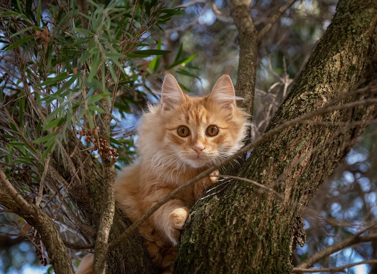 Картинка кот рыжая Ствол дерева животное коты Кошки кошка рыжие Рыжий Животные