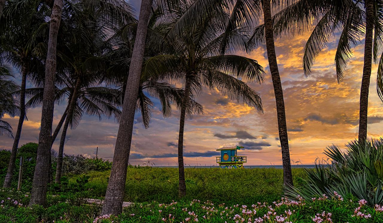 Обои для рабочего стола Флорида штаты Atlantic Heights Miami Beach Природа Пальмы Рассветы и закаты Трава США америка пальм пальма рассвет и закат траве