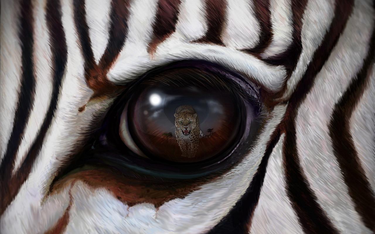 Картинки Зебры Леопарды Глаза Отражение Животные Крупным планом зебра леопард отражении отражается вблизи животное