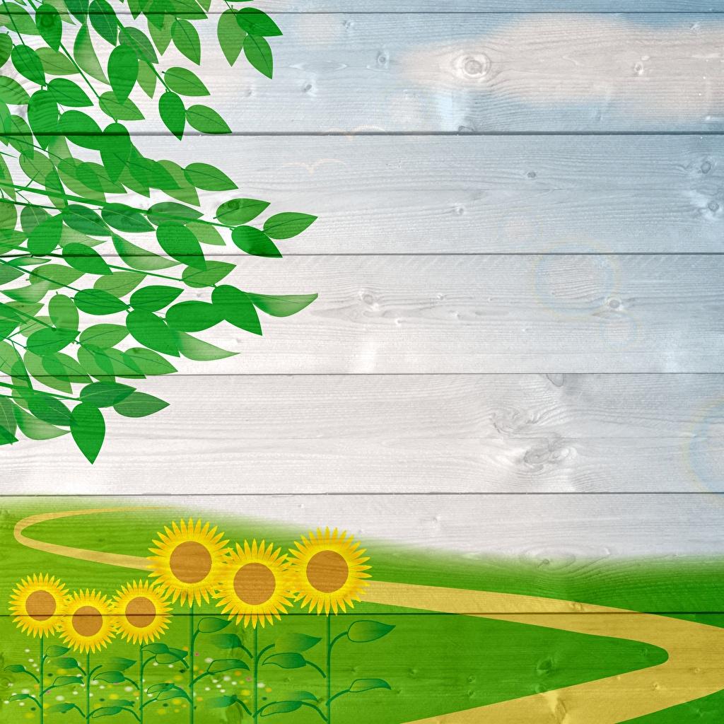 Обои для рабочего стола Природа Подсолнухи ветвь Шаблон поздравительной открытки Доски Подсолнечник Ветки ветка на ветке