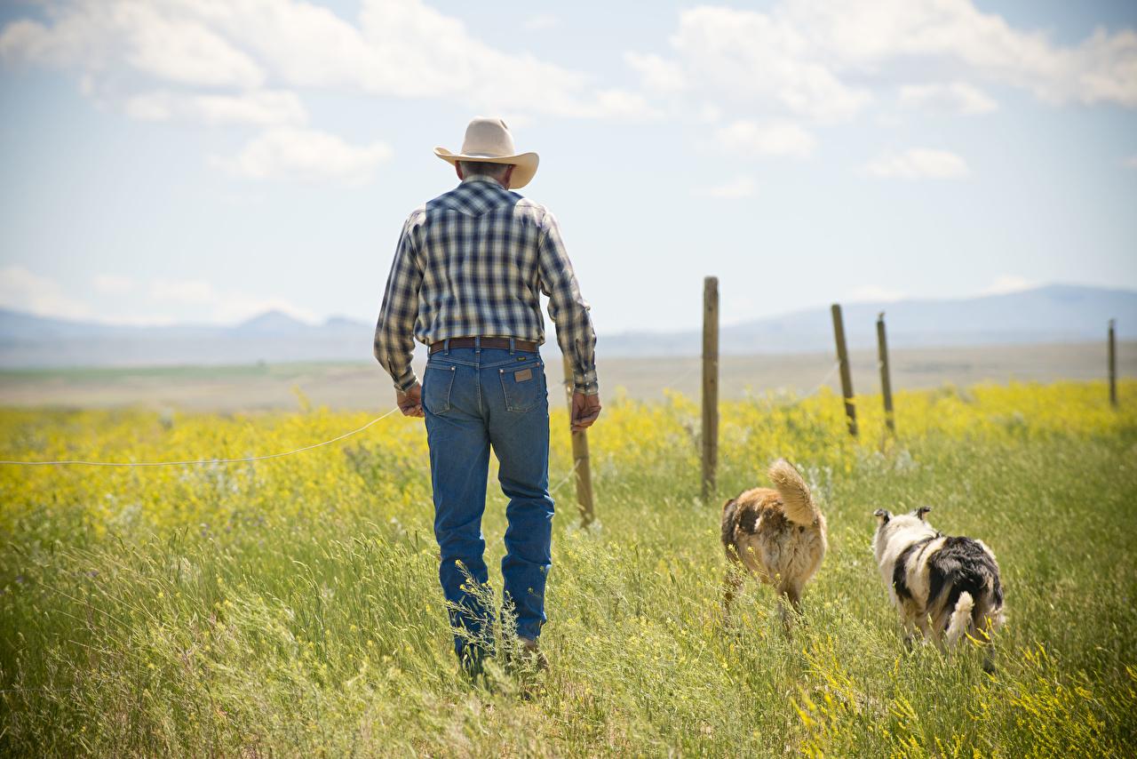 Фото Собаки Ковбой Мужчины Шляпа Джинсы Трава Животные