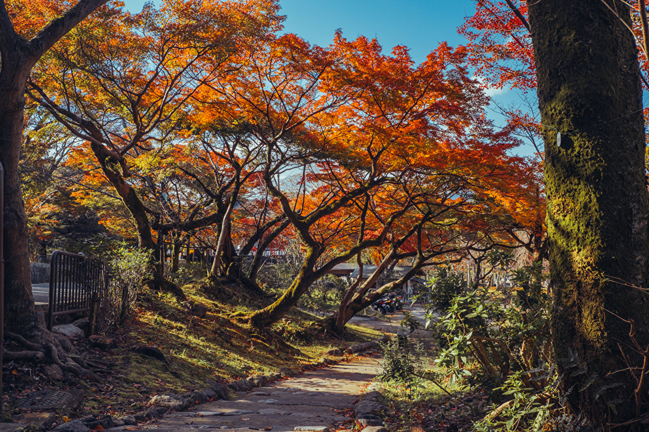 Картинка Киото Япония Листья Maruyama Park Осень Природа парк Ствол дерева Мох Деревья лист Листва осенние Парки мха мхом дерево дерева деревьев