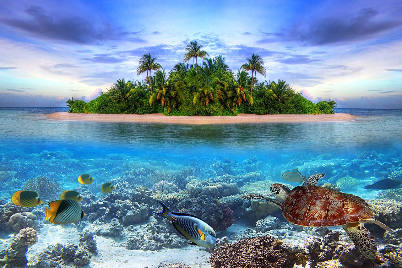 Под водой фото океан