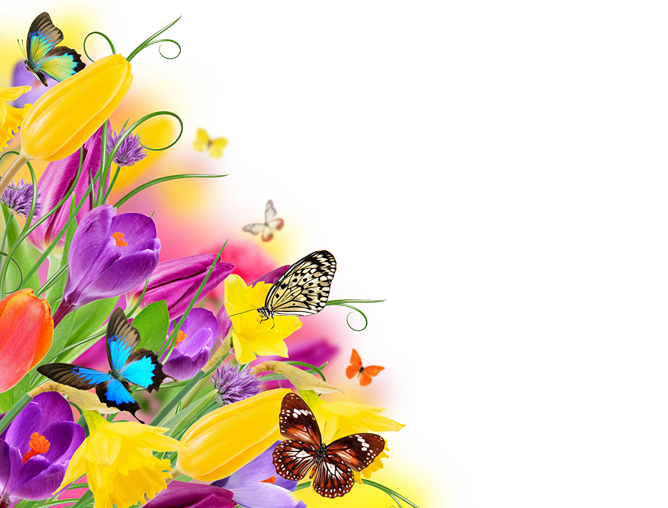 Картинки бабочки цветы