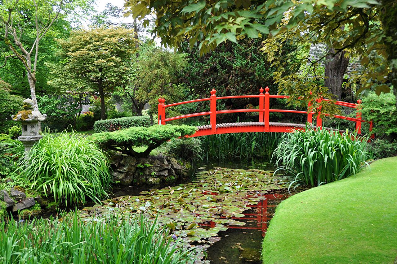 Обои для рабочего стола мост Природа парк Пруд Трава Мосты Парки траве