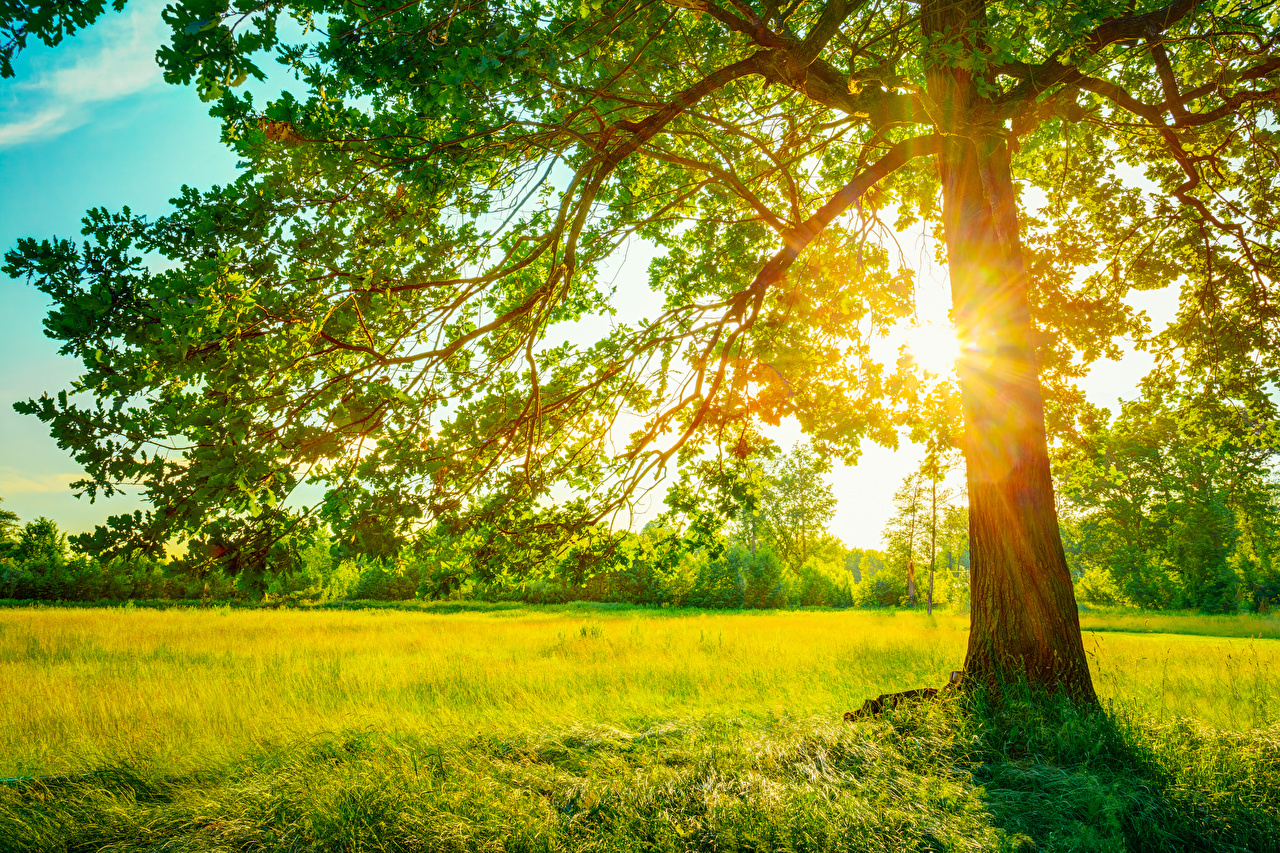 Фотография Лучи света Природа траве Деревья Трава дерево дерева деревьев