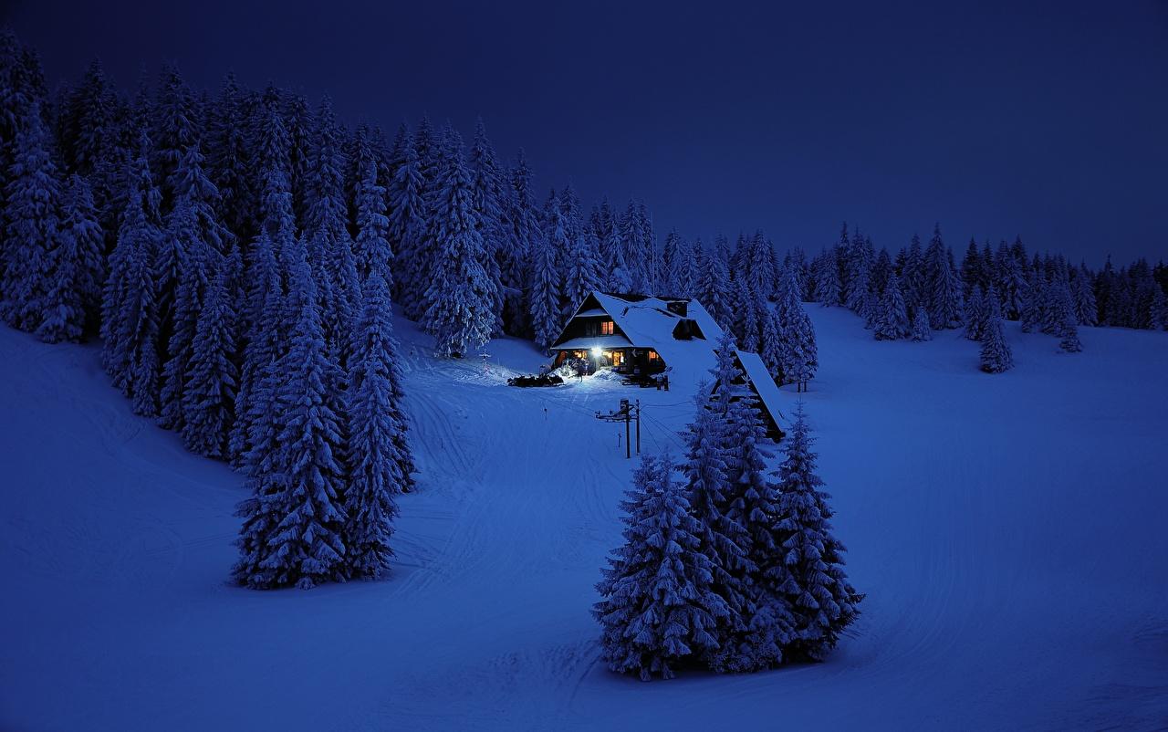 Фотографии Ель Зима Природа Снег Леса ночью Здания ели зимние лес снеге снега снегу Ночь в ночи Ночные Дома