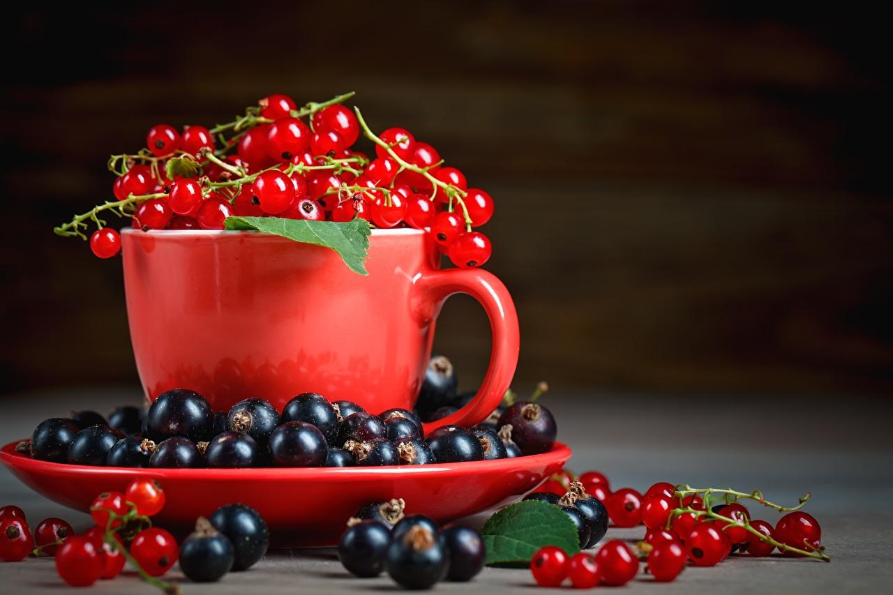 Фото Смородина Ягоды чашке Блюдце Продукты питания Еда Пища Чашка блюдца