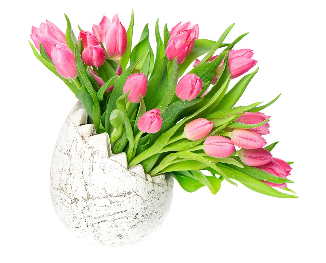Картинка розовые Тюльпаны Цветы Ваза Белый фон розовых Розовый розовая тюльпан цветок вазы вазе белом фоне белым фоном